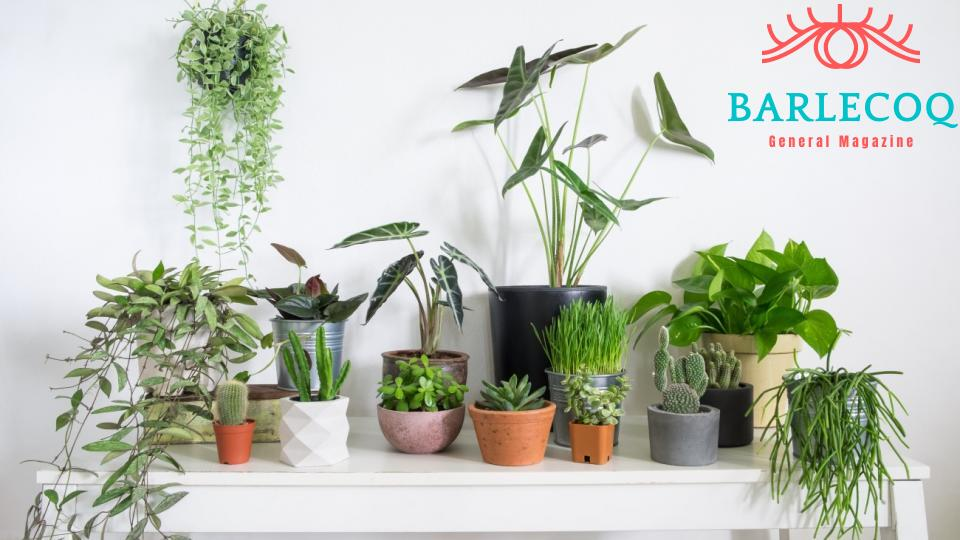 Get Good Value For Your Indoor Plants